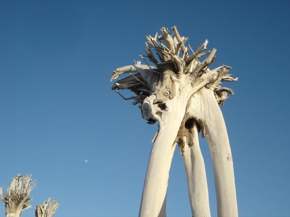 Luna y paisaje en Tenerife Norte