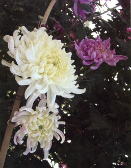 Crisantemo kiku sumie Maria Eugenia Manrique